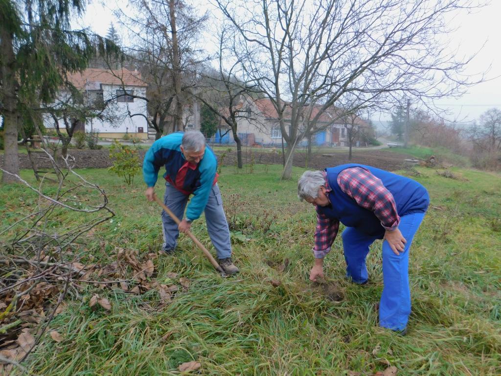 Výsadba medonosných dřevin v obci
