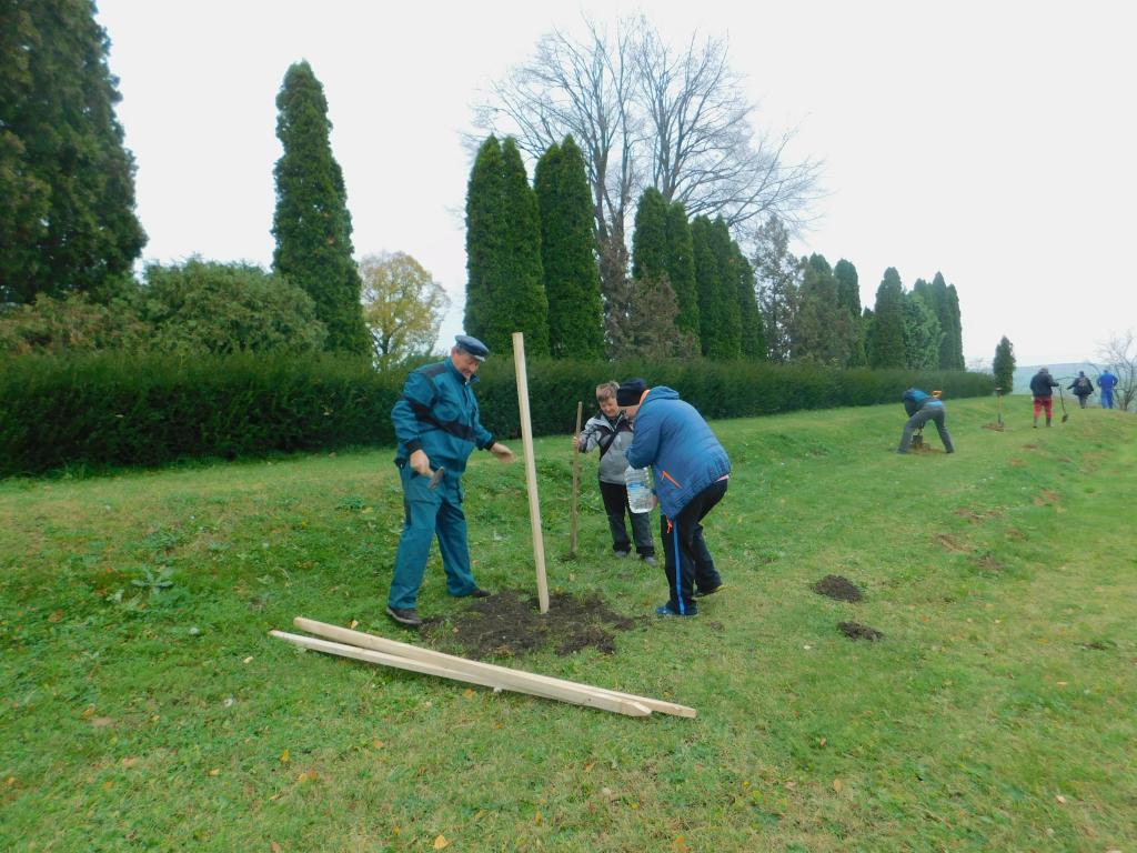 Výsadba medonosných dřevin