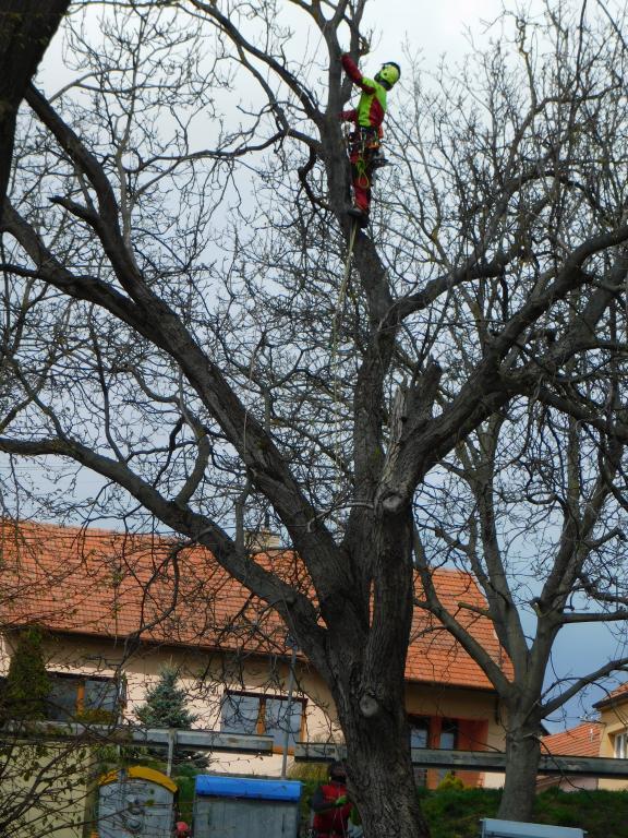 Zdravotní ořez stromů