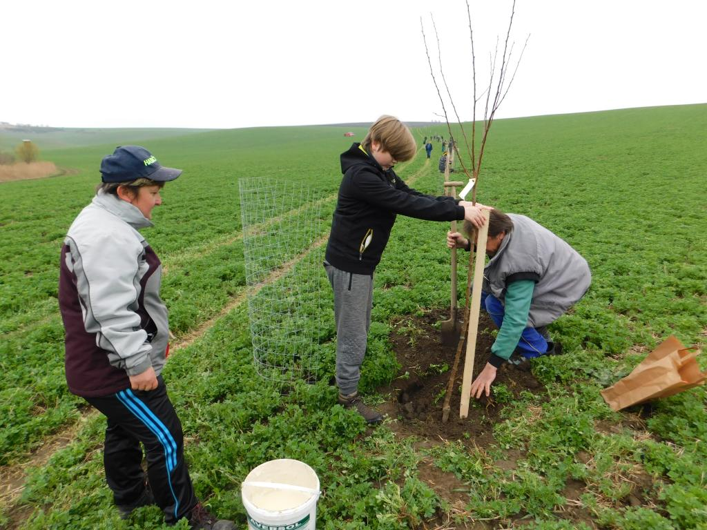 Sázení stromků podél znovuobnovené polní cesty